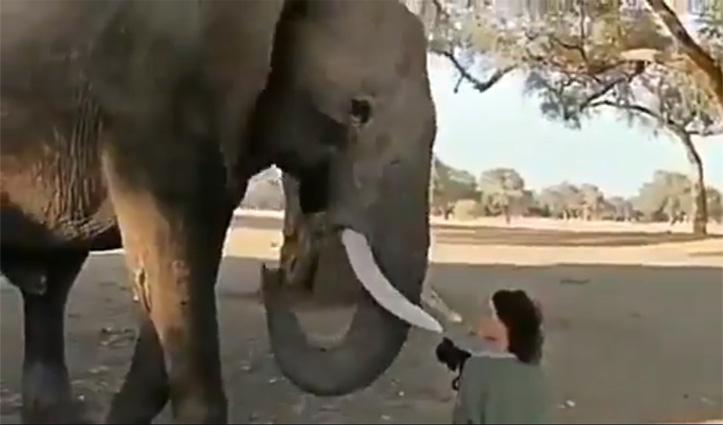 वीडियो : Photo खींच रही थी महिला, हाथी ने किया कुछ ऐसा जो सबके लिए सीख