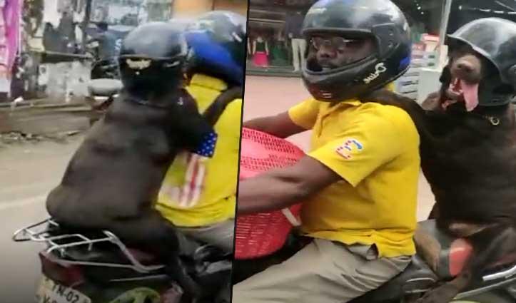 Video: मालिक ने कुत्ते को हेलमेट पहना बाइक पर घुमाया, हुआ वायरल