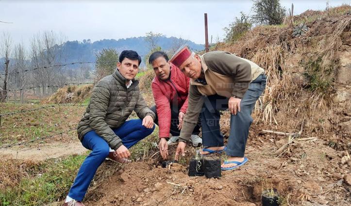 हींग की खेती से महकेगी जयराम की जंजैहली, IHBT ने लगाए पौधे
