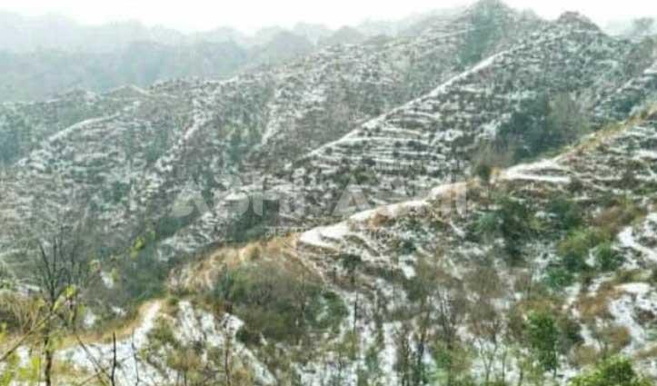 हमीरपुर: लगवाल्ती क्षेत्र में हुई भारी ओलावृष्टि, गेहूं की फसल को पहुंचा नुकसान