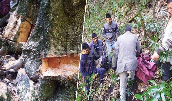 सराज के जंगल में पेड़ काटने पहुंचे तस्कर, लोगों को लगी भनक-फरार