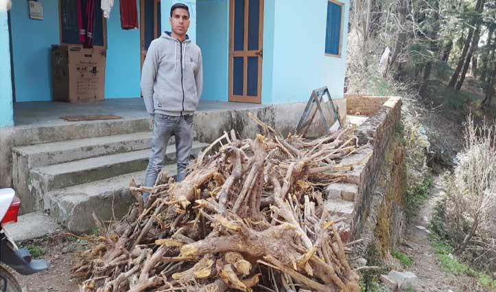 रोहांडा के जंगलों से कसमल की जड़ों का हो रहा अवैध व्यापार, बेच डाली लाखों की वन संपदा