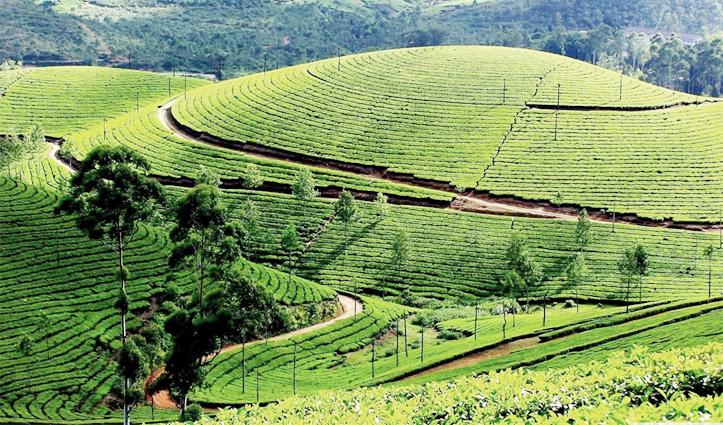 उत्तर-पश्चिम भारत की चाय की राजधानी है ये