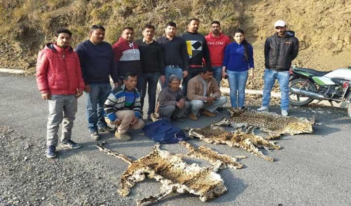 Sirmaur: जंगली जानवरों की अंग तस्करी का भंडाफोड़, तेंदुए की 4 खालों संग 3 धरे