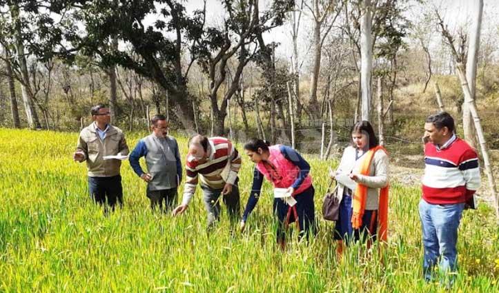 पीले रतुए से प्रभावित किसानों के खेतों में पहुंचे Delhi से आए कृषि वैज्ञानिक