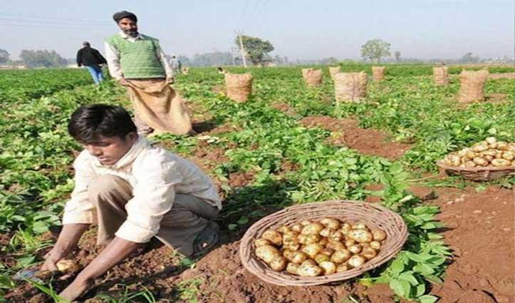 एक बार फिर बढ़ने वाले हैं आलू के दाम, Farmers को नहीं मिल पाएगी लागत