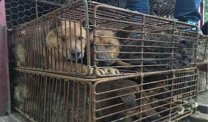 नहीं सुधरा चीन : जिस मार्केट से फैला कोरोना वायरस, वहां फिर बिक रहा चमगादड़ का मांस
