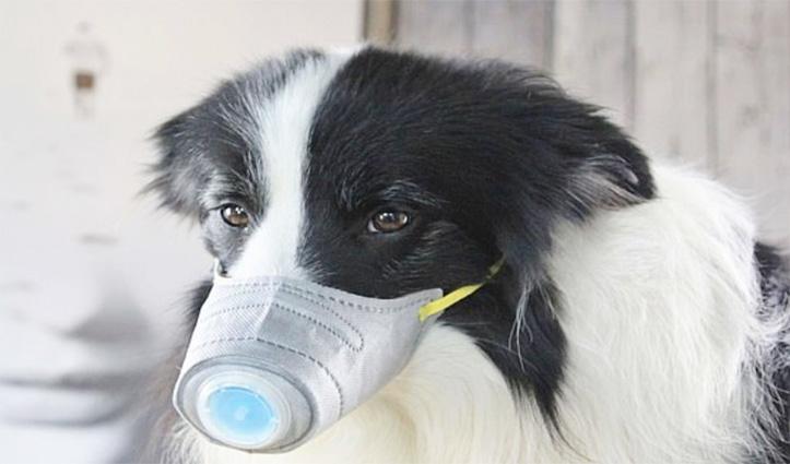 इंसान से जानवर में ट्रांसफर हुआ Corona virus, पालतू कुत्ता बना शिकार