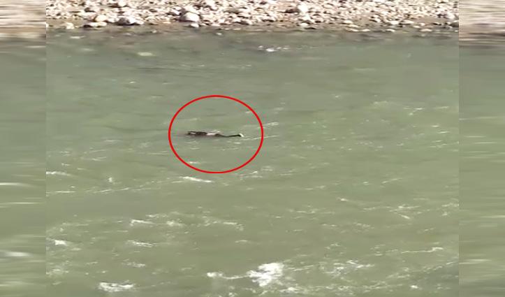 महिला ने ब्यास नदी में लगाई छलांग, पुलिस कर रही तलाश