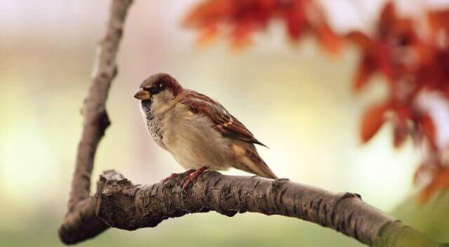 Corona के खौफ के बीच सुनाई देने लगी पक्षियों की चहचहाहट, ये है कारण