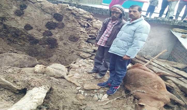 Chamba: गौशाला की छत गिरने से दबे तीन पशु, चुवाड़ी के कई गांवों में ब्लैक आउट
