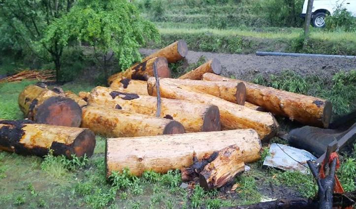 नाचन में संदेह के घेरे में देवदार के पेड़ों का कटान, आखिर आरा मशीन पर क्यों छोड़ी लकड़ी