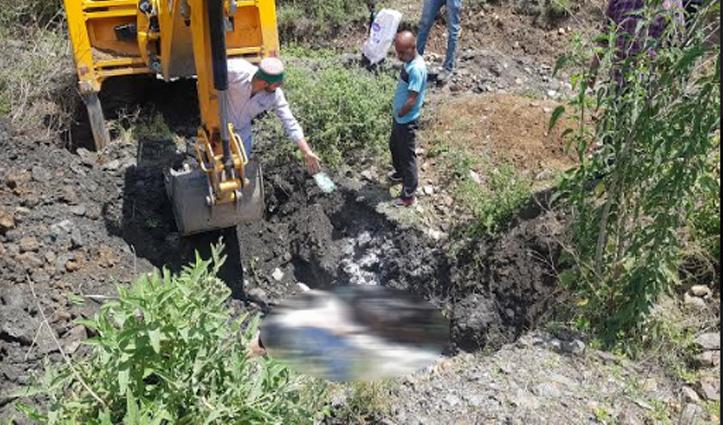 Sirmaur के राजगढ़ में जहरीला पदार्थ खाने से तीन गायों की मौत