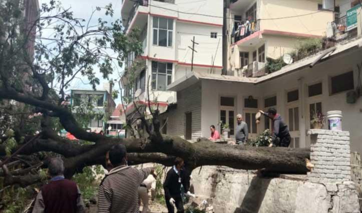 डीसी ऑफिस पर गिरा पेड़, फिर ये हुआ