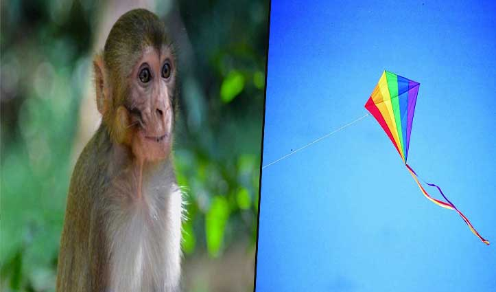 'Lockdown में तेजी से हो रहा Evolution, बंदर ने पतंग उड़ाना सीखा' ; देखें वीडियो
