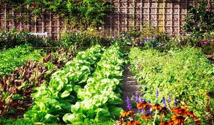 Kitchen Garden बनाने के लिए महिलाओं को करेंगे Trained, बीज किट और पौधे भी देगी सरकार