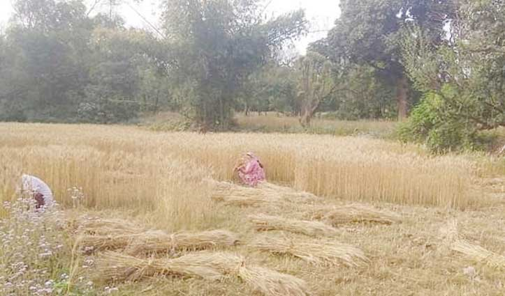 गेहूं कटाई को MGNREGA के तहत लाने की मांग, सरकार की बेरुखी पर Mukesh परेशान