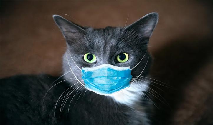 US में Covid-19 से संक्रमित होने वाली पहली पालतू जानवर बनीं न्यूयॉर्क की 2 बिल्लियां