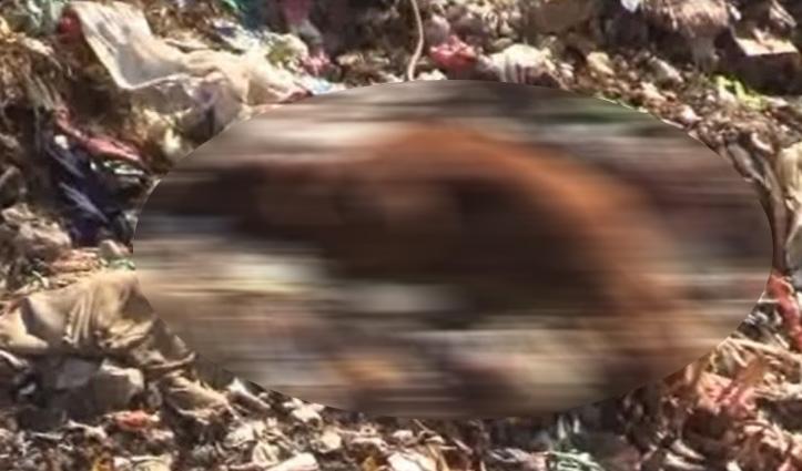 Sundernagar डंपिंग साइट पर खुले में फेंके मरे हुए पशु, चारों तरफ फ़ैली बदबू