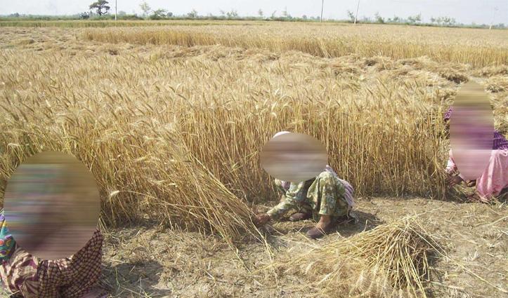 Kangra में अब किसान 24 घंटे कर सकते हैं फसल कटाई का कार्य