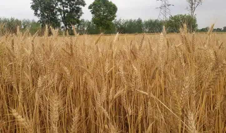 फसल कटाई को दूसरे स्थान पर जाने के लिए किसान ऐसे करें आवेदन