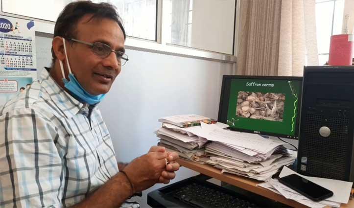 कृषि Scientist का खुलासा- असली केसर के नाम पर ठगे जा रहे Himachal के किसान