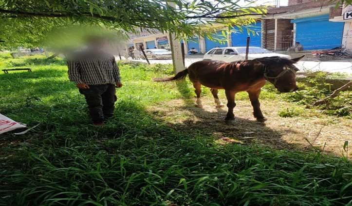 J&K: रेड ज़ोन से लौटे घोड़े और उसके मालिक को Quarantine में भेजा गया