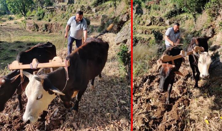 Lockdown में देखें रेणुका के MLA विनय कुमार का अलग अंदाज, खेत में चलाया हल