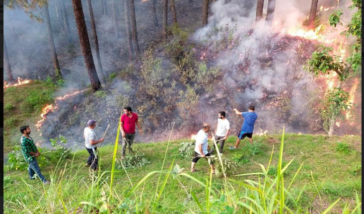 Sundernager: चांबी के जंगल में आग से लाखों की वन संपदा हुई राख, जीव-जंतु भी जले