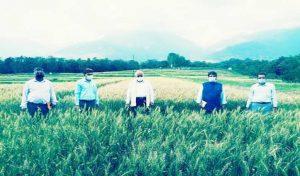 Himachal को गेहूं बीज उत्पादन में आत्मनिर्भर बनाने में कृषि विश्वविद्यालय की बड़ी सफलता