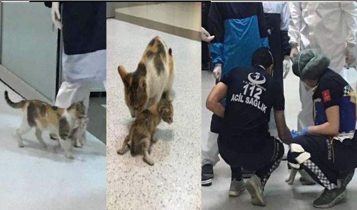 Viral: अपने बीमार बच्चे को लेकर अस्पताल पहुंची ये बिल्ली, हैरान हुए Doctor