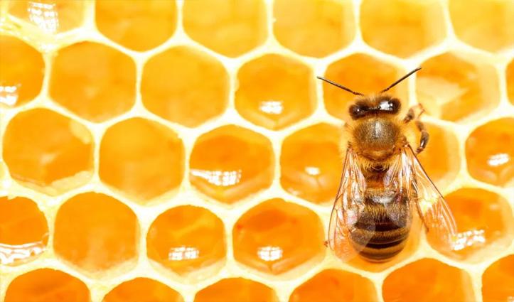 एक ही जीन की मदद से मधुमक्खियां दे सकती हैं 'बिना Sex किए जन्म': वैज्ञानिकों का खुलासा