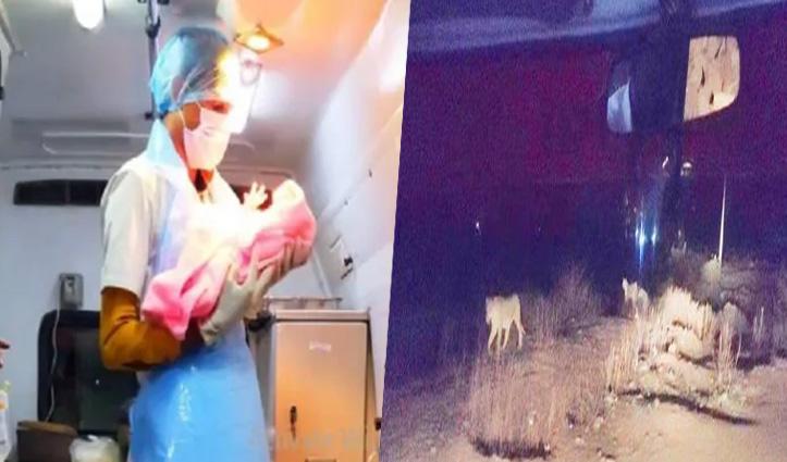 चार बब्बर शेरों के बीच महिला ने Ambulance में दिया बच्ची को जन्म, पढ़े क्या था पूरा माजरा