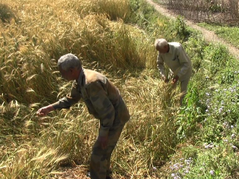 लॉकडाउन के साथ मौसम की मार ने किसानों के अरमानों को किया तार-तार