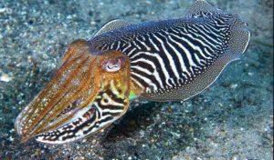 इस समुद्री मछली के शरीर में होते हैं 3 दिल, खून का रंग भी नहीं है लाल