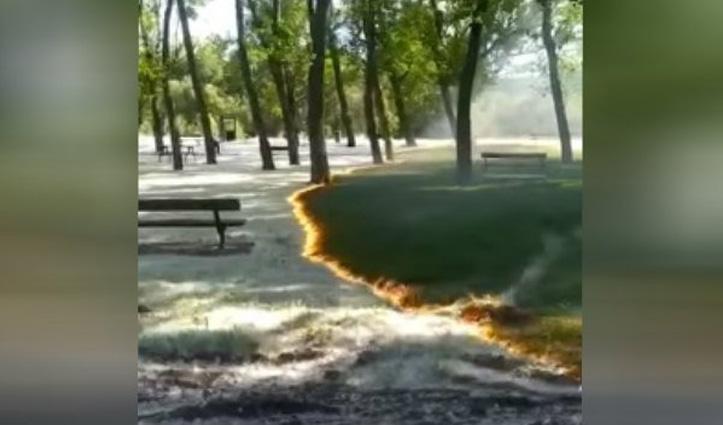Park में लगी आग ने नहीं पहुंचाया पेड़ों और घास को नुकसान, Video हुआ वायरल