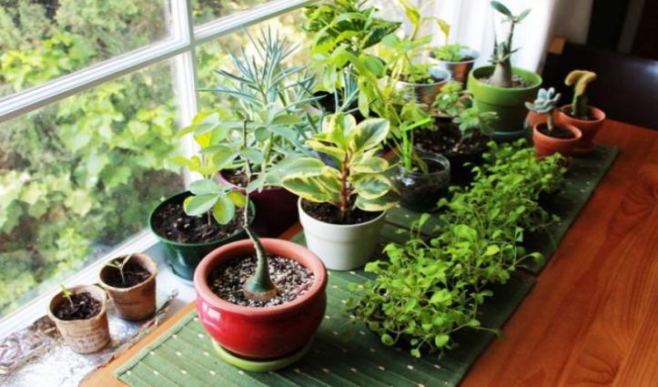 घर और दफ्तर में सकारात्मक ऊर्जा लाते हैं ये पौधे, जरूर लगाएं