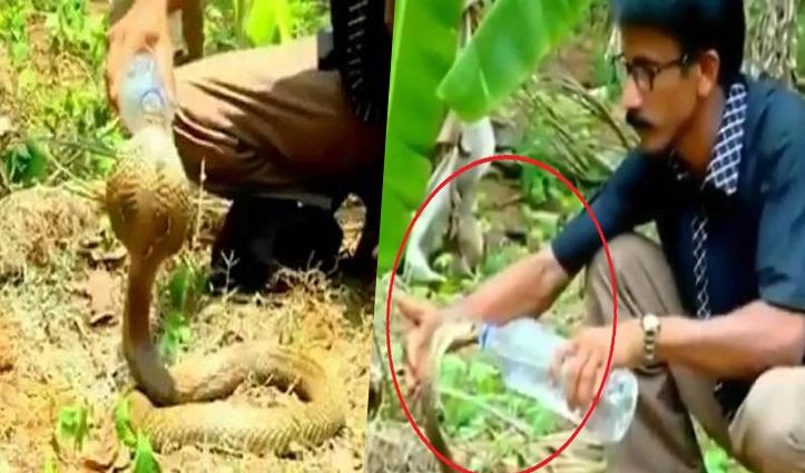 मानवता: वन अधिकारी ने प्यासे Cobra को अपने हाथों से पिलाया पानी, Viral हुआ वीडियो