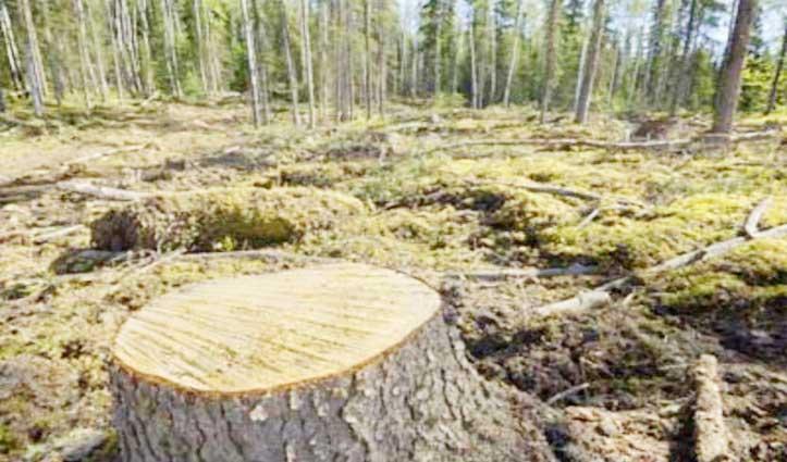 लॉकडाउन के बीच Mining Area में काट डाले सैकड़ों हरे पेड़, पढ़ें कहां की शिकायत