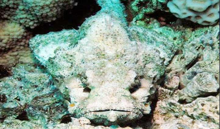 ये है दुनिया की सबसे जहरीली मछली, छूने भर से हो जाती है मौत