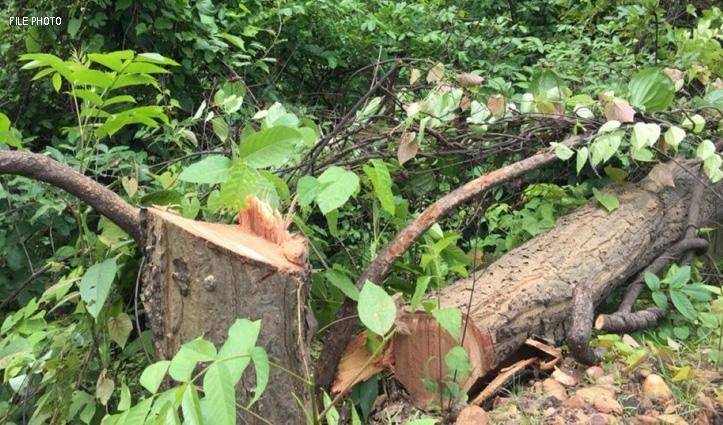 Himachal के जंगलों में 400-500 से ज्यादा काट डाले पेड़, कुछ को जला डाला