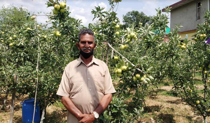 रिटायर्ड फौजी ने बदली रीत, पारंपरिक खेती छोड़ उगाए सेब