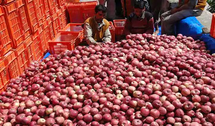 Good News: सेब उत्पादक इलाकों में मजदूरी करना चाहते हैं तो यहां पर करें संपर्क