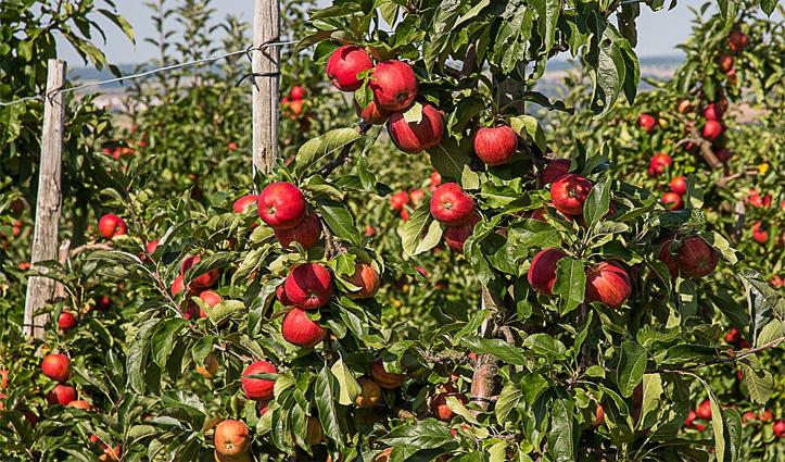 सेब सीजन से पहले Himachal आने के लिए जारी हुए बड़े आदेश, पढ़कर ही आना