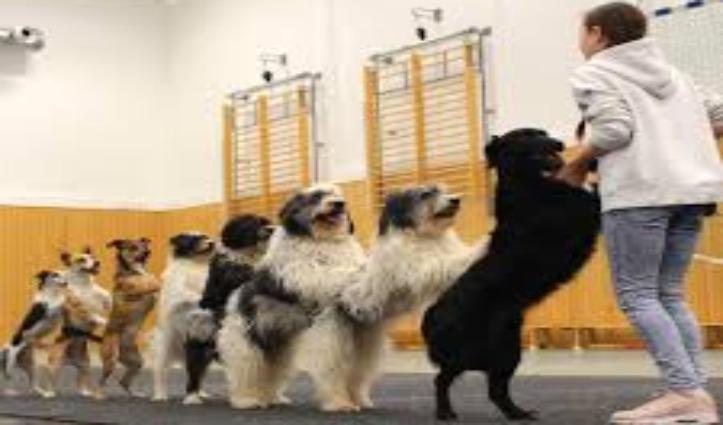 Viral Video :12 साल की लड़की ने 8 कुत्तों को सिखाया डांस, Guinness Book में दर्ज हुआ नाम