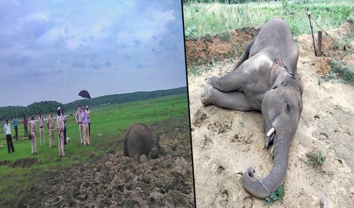 Chhattisgarh में 2 और हाथियों की मौत: हफ्ते भर के भीतर कुल 5 हाथियों ने गंवाई है जान