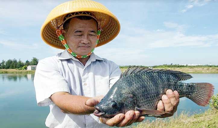शख्स के मलाशय से पेट में घुस गई 16 इंच लंबी मछली, Operation से निकाली तो हैरान रह गए डॉक्टर