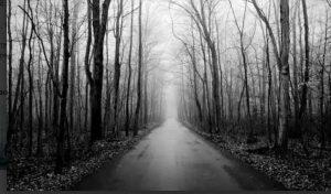 ये है दुनिया का सबसे डरावना जंगल, यहां रहस्यमयी तरीके से गायब हो जाते हैं लोग