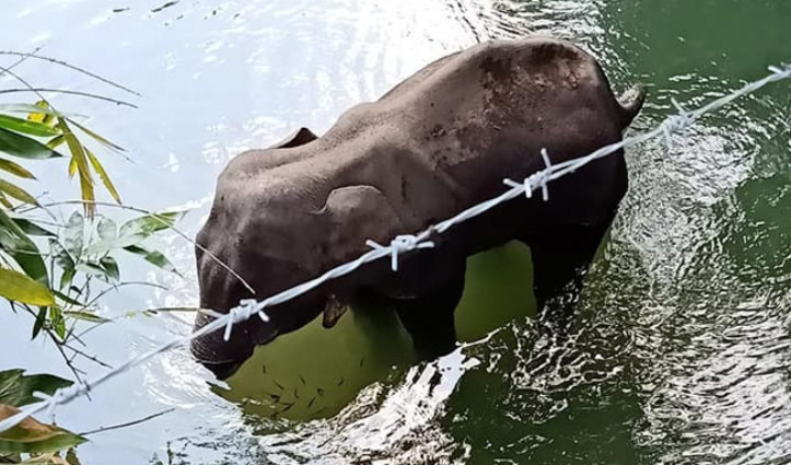 हथिनी मौत मामला – पर्यावरण मंत्रालय ने मांगी Report, होगी पूरी जांच