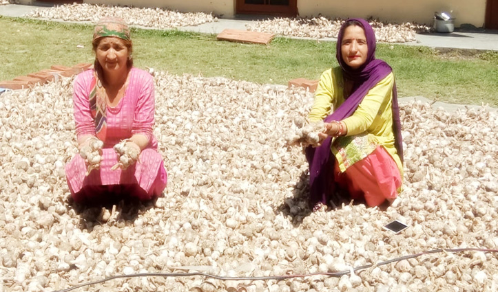 लहसुन की खेती से किसान मालामाल